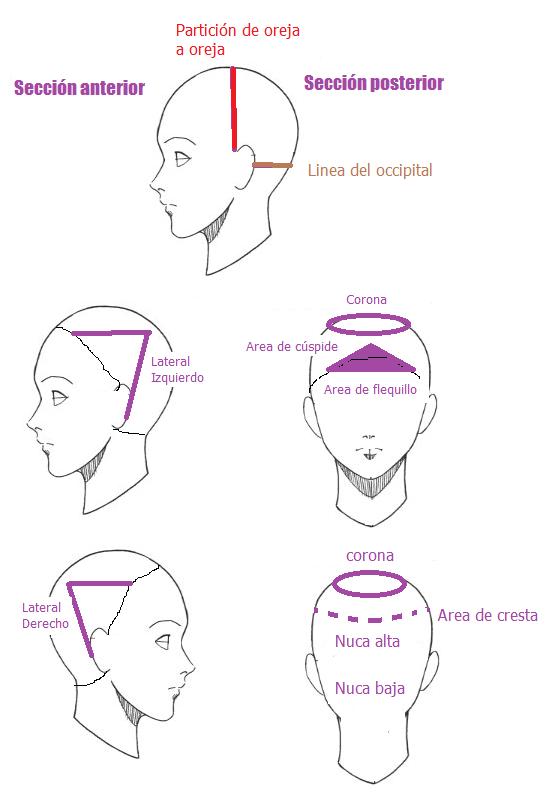 secciones de la cabeza corte de cabello