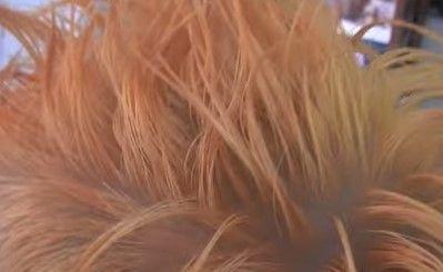 cabello fondo negro 5
